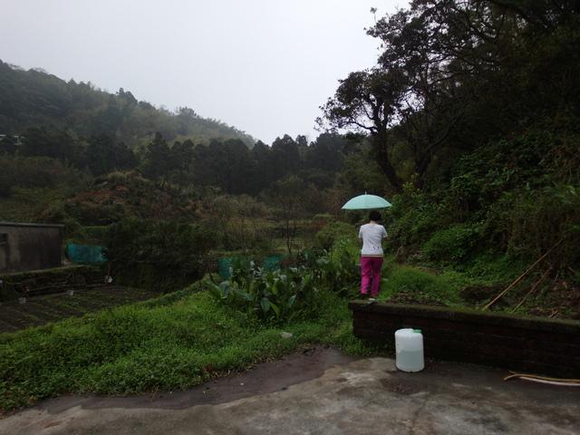 竹子湖步道  (260).JPG