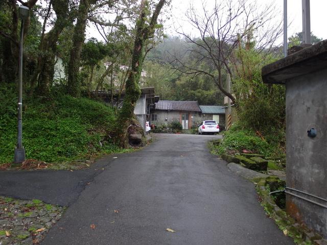 竹子湖步道  (274).JPG