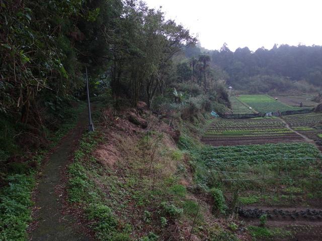 竹子湖步道  (275).JPG