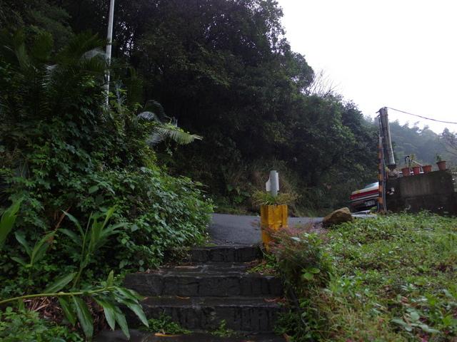 竹子湖步道  (277).JPG