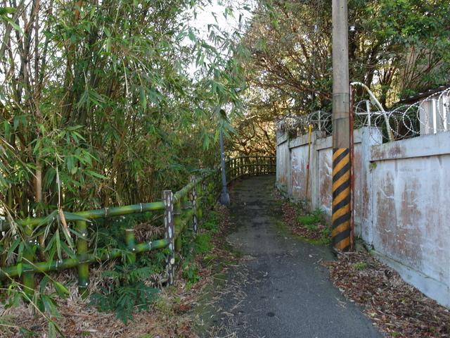 竹子湖步道  (329).JPG