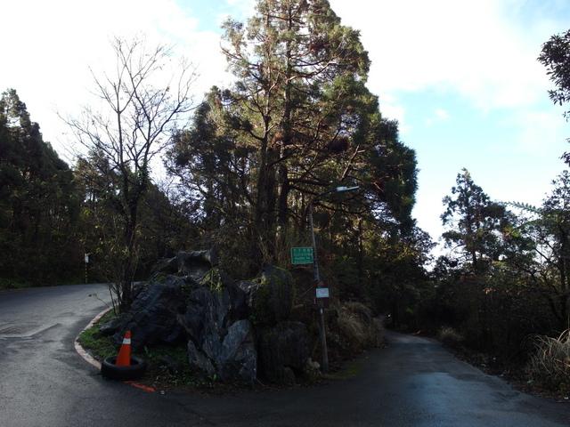 竹子湖步道  (348).JPG