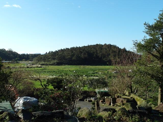 竹子湖步道  (351).JPG