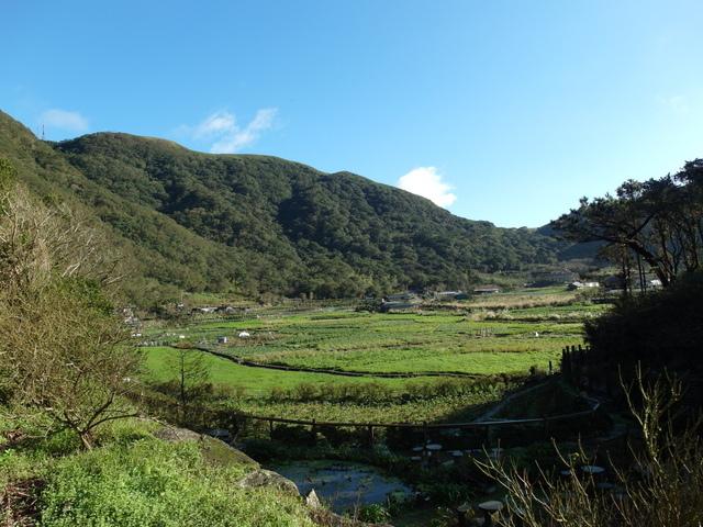 竹子湖步道  (352).JPG