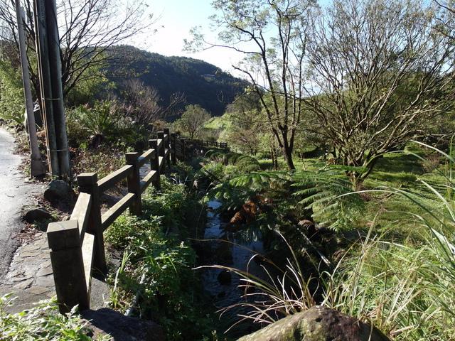 竹子湖步道  (357).JPG