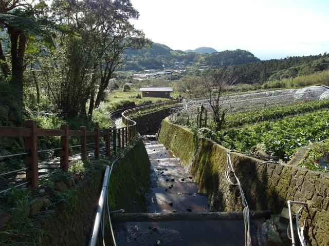 竹子湖步道  (367).JPG