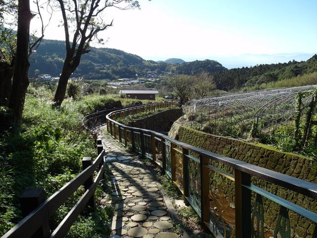 竹子湖步道  (369).JPG