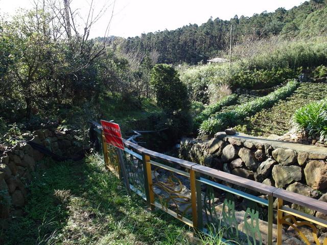 竹子湖步道  (373).JPG