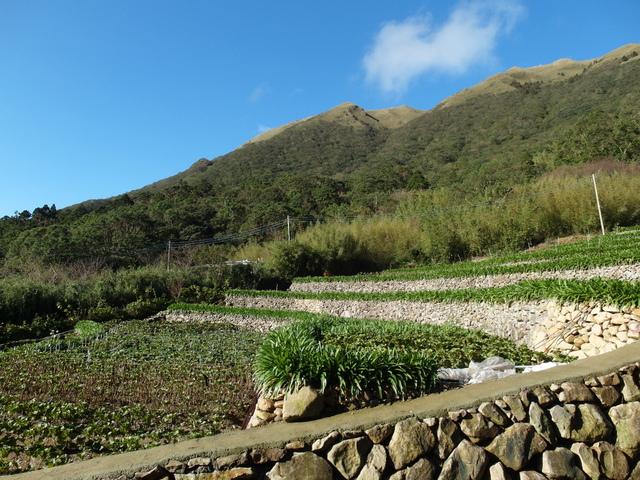 竹子湖步道  (375).JPG