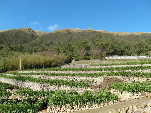 竹子湖步道  (380).JPG