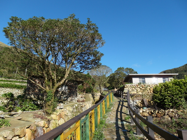 竹子湖步道  (381).JPG