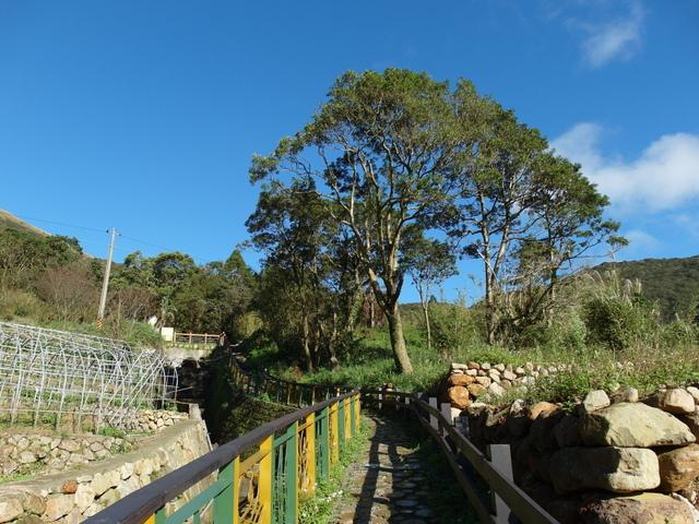 竹子湖步道  (383).JPG