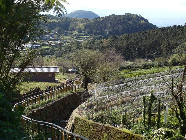 竹子湖步道  (386).JPG