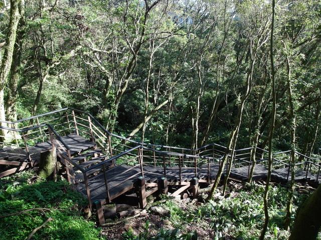 竹子湖步道  (397).JPG