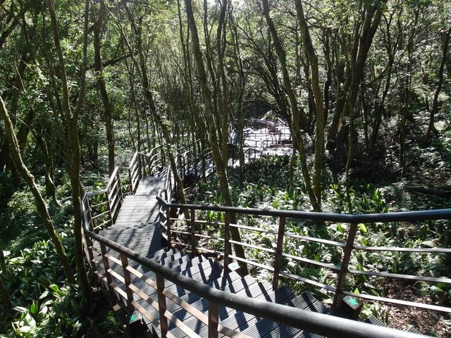 竹子湖步道  (398).JPG