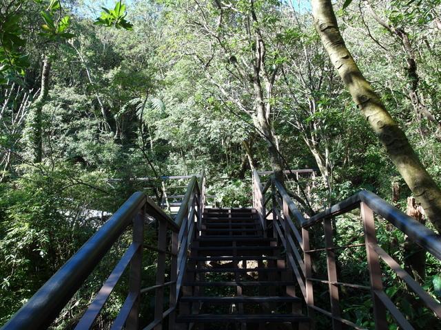 竹子湖步道  (399).JPG