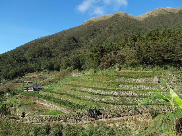 竹子湖步道  (410).JPG