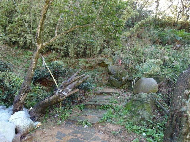 竹子湖步道  (411).JPG
