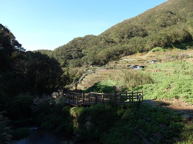竹子湖步道  (415).JPG