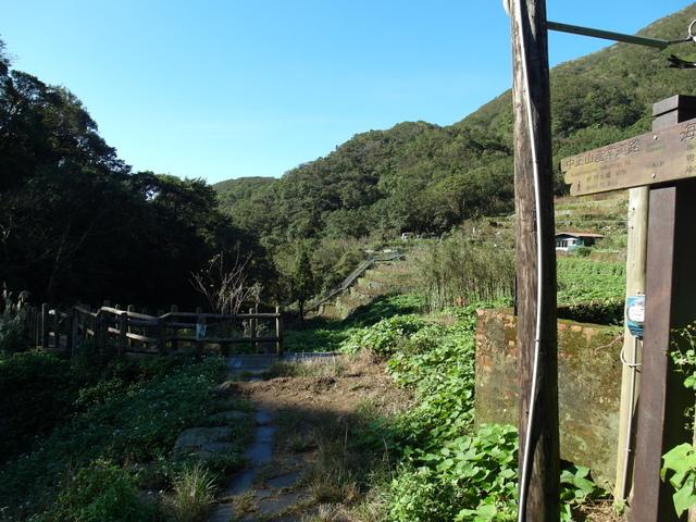 竹子湖步道  (418).JPG