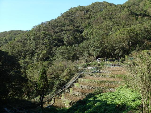 竹子湖步道  (420).JPG