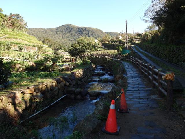 竹子湖步道  (423).JPG