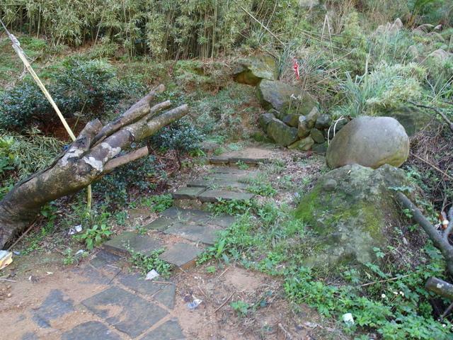 竹子湖步道  (424).JPG