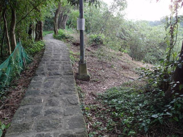 白鷺鷥山 (16).JPG