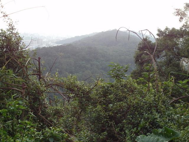 白鷺鷥山 (44).JPG