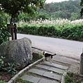 白鷺鷥山 (52).JPG