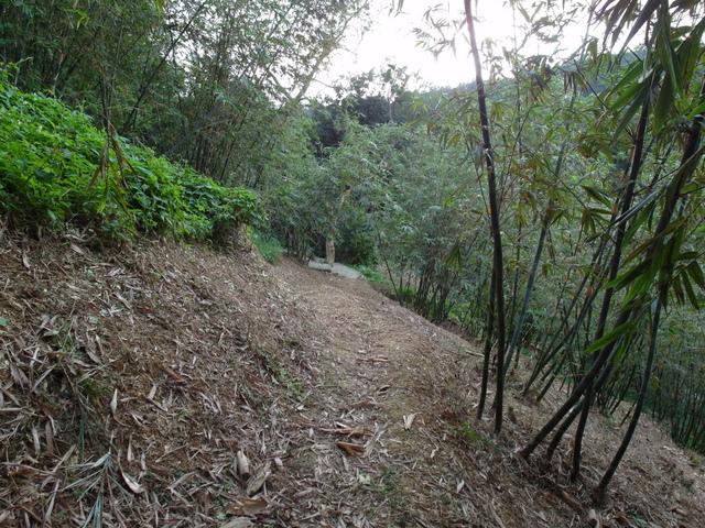白鷺鷥山 (50).JPG