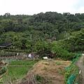 竹子湖步道  (465).JPG