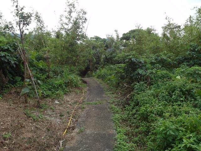竹子湖步道 (466).JPG