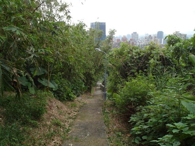 竹子湖步道 (467).JPG