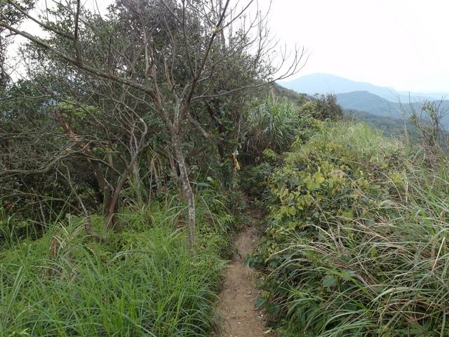 大武崙山 (34).jpg