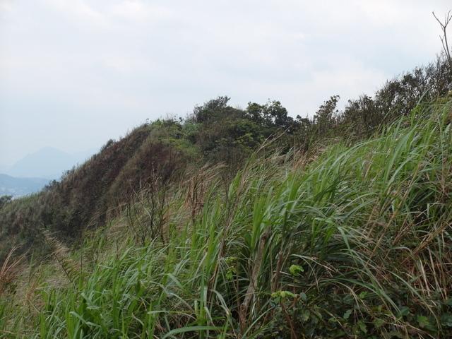 大武崙山 (53).jpg