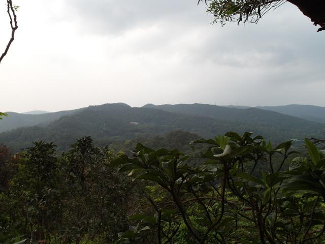 牛稠尾山 (43).JPG