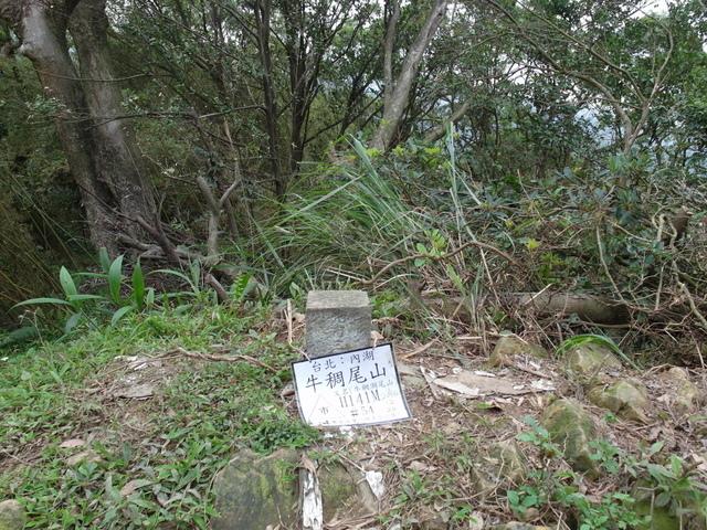 牛稠尾山 (49).JPG