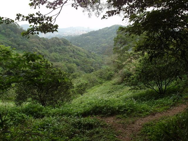 牛稠尾山 (59).JPG