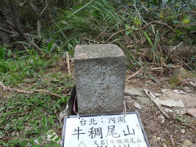 牛稠尾山 (56).JPG