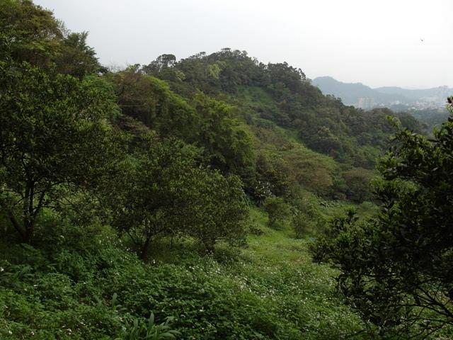 牛稠尾山 (61).JPG