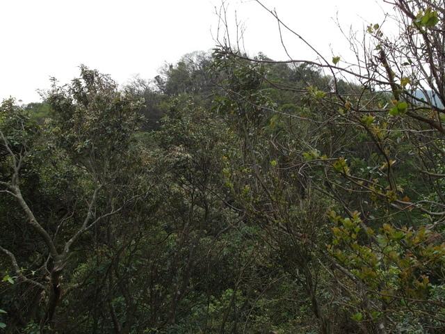 牛稠尾山 (65).JPG