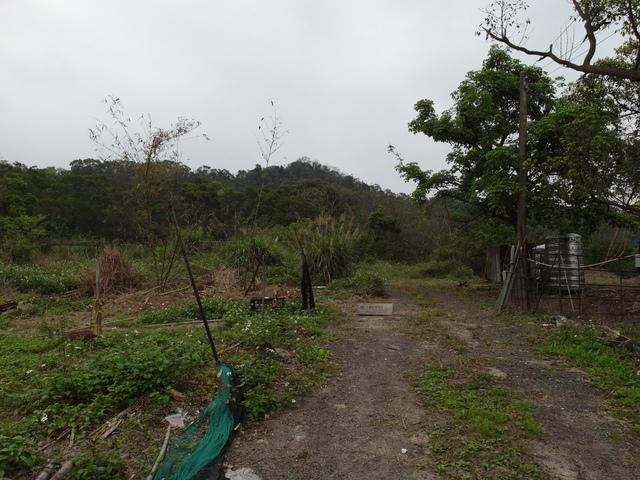 牛稠尾山 (83).JPG
