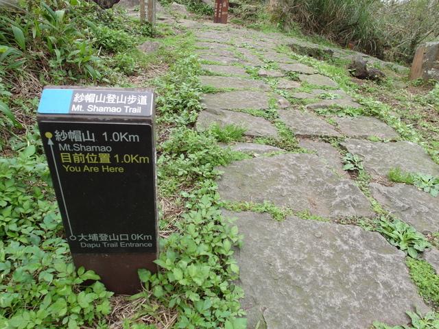 紗帽山 (249).JPG