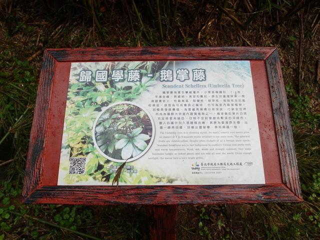 橫嶺古道 (7).JPG