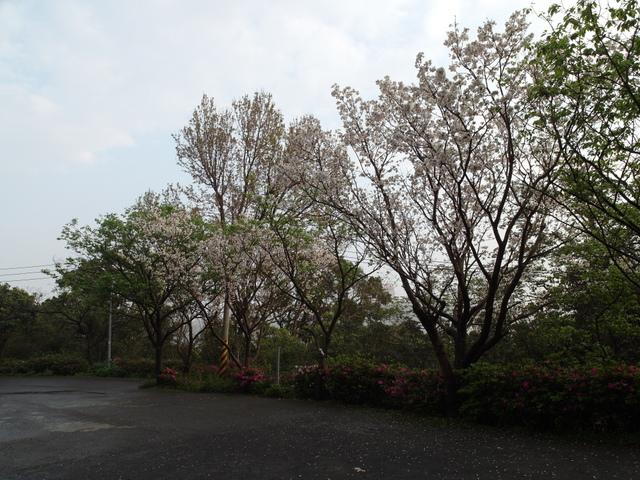 橫嶺古道 (10).JPG