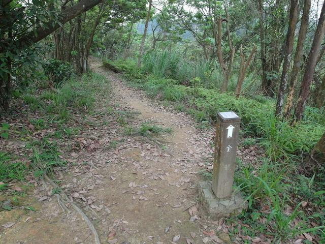 老鷲山 (94).JPG