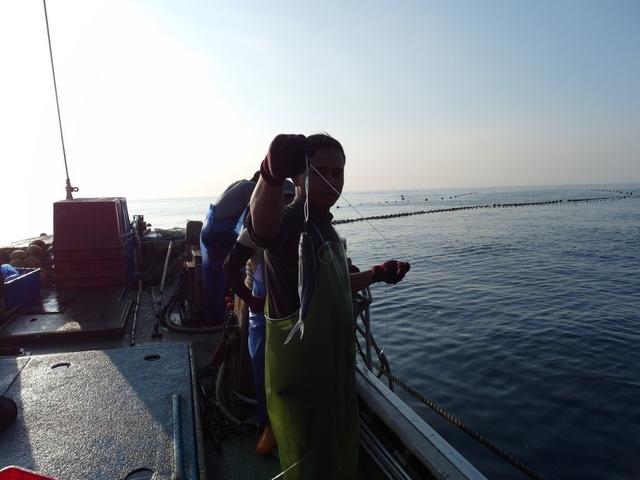 粉鳥林漁港  (56).JPG