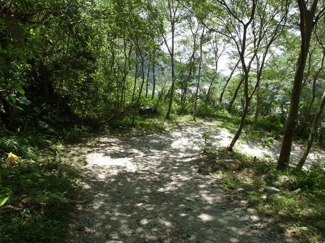 小錐麓步道 (55).JPG
