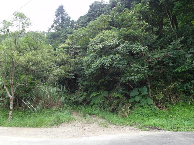 東眼山 (3).JPG